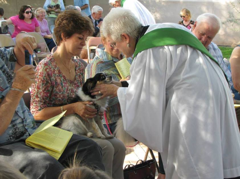 bless of animals2