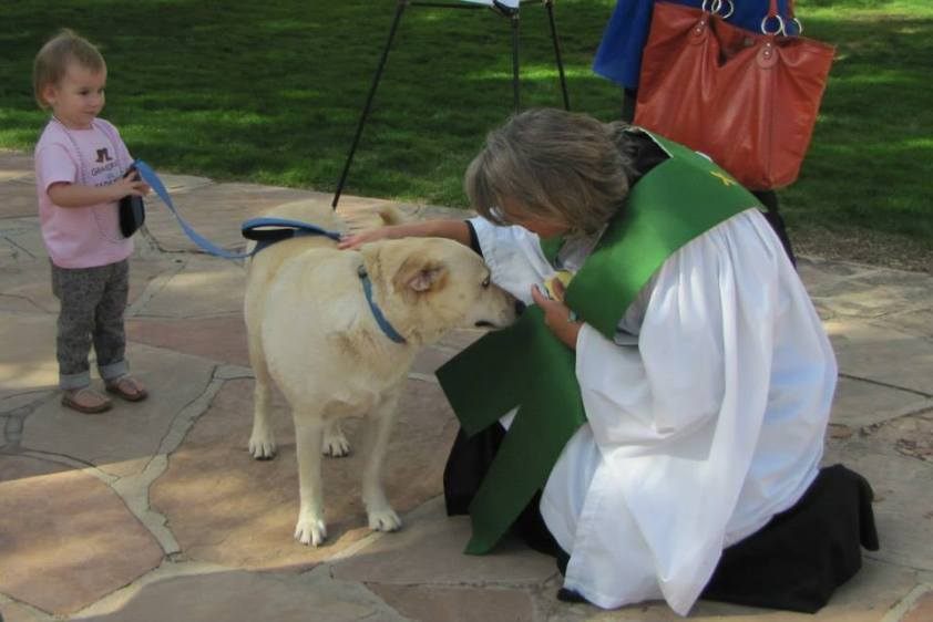 bless of animals5